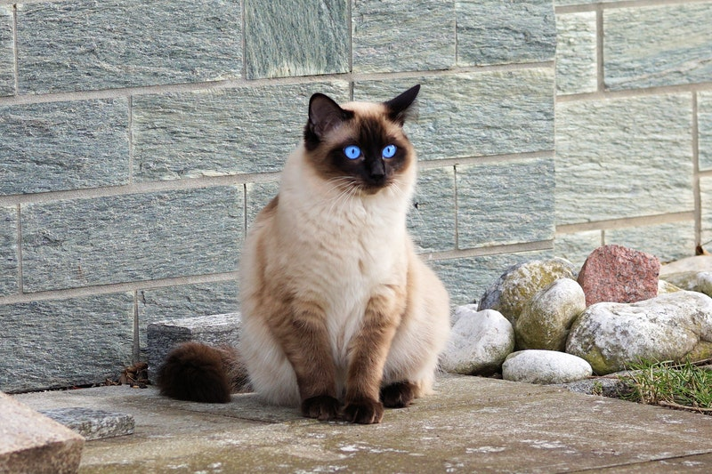 Kaya Akan Manfaat Yuk Kenali Si Makanan Kucing Bolt